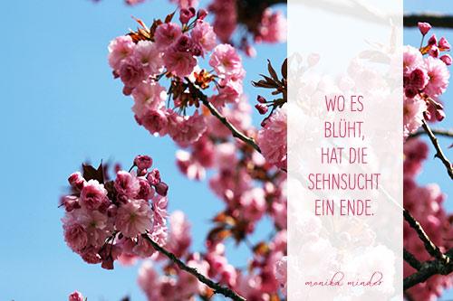 Gänseblümchen Nahaufnahme mit hellgrünem Hintergrund und kurzem ...